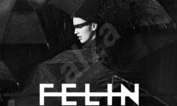 VIDEO: Felin – 'Gossip'